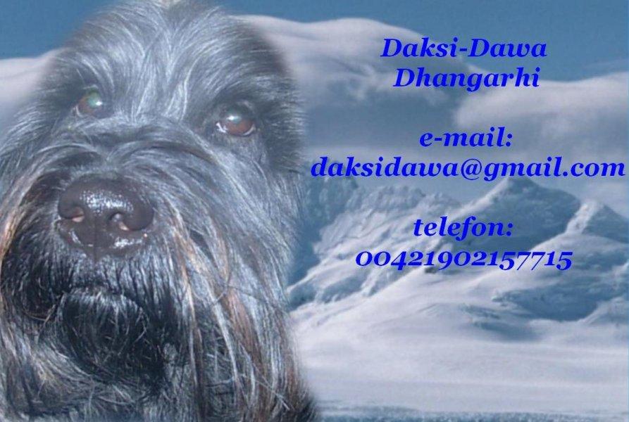 Daksi-Dawa Dhangarhi-kontakt